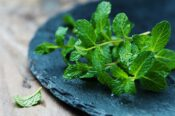 Fresh green mint on the wooden table, selective focus