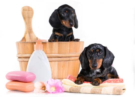 dog pet care natural products