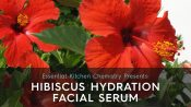 how to make hydrating serum hibiscus DIY recipe